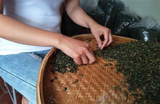 安溪铁观音最贵多少钱?2018铁观音茶叶市场调查