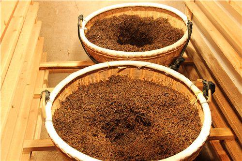 清明早红茶研制成功,填补浙江瑞安市红茶生产空白