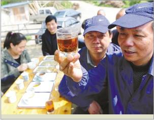 临海红茶研制成功台州茶叶又添新族