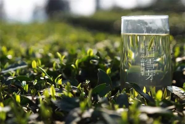 """峨眉山""""产业+""""模式催生中国绿茶之都强势崛起"""