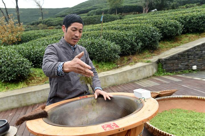 杭州头茬西湖龙井茶开始炒制