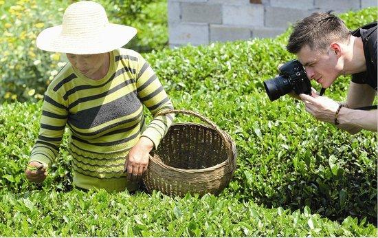 三峡绿茶将亮相美国杂志作为世界主要茶叶亮相