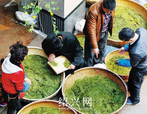 中国茶市:文化搭台龙井飘香