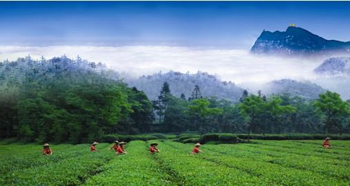 峨眉雪芽绿茶品牌荣获中国驰名商标