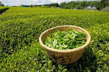 <a href=http://www.chayu.com/baike/399 target=_blank >六安瓜片</a>属于绿茶吗