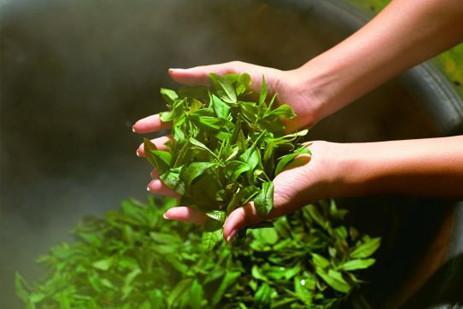 绿茶的禁忌 绿茶的副作用