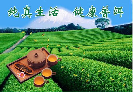 临沧澜沧江原生普洱茶