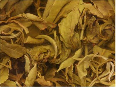秋季喝百合花茶的功效