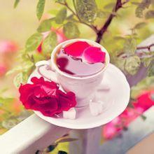 玫瑰花茶的制作工艺介绍