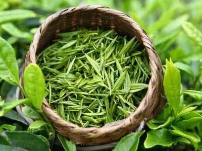 绿茶知识:庐山云雾茶冲泡方法步骤