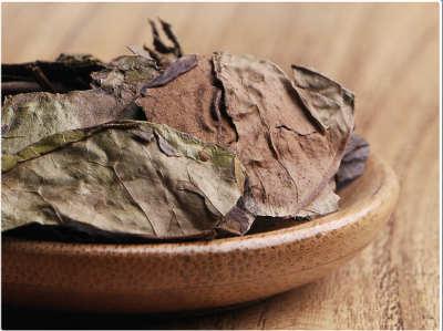 辨别新老白茶的方法的介绍