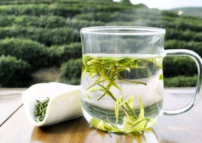 孕妇可以喝白茶吗